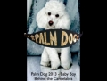 "Cannes 2013: Cainele Baby Boy din filmul ""Behind the Candelabra"" a castigat premiul Palm Dog"